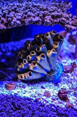 fish-ncworks-12-of-48