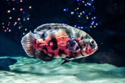 fish-ncworks-16-of-48