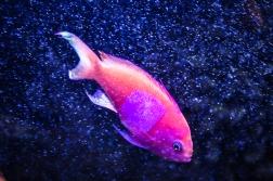 fish-ncworks-19-of-48