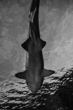 fish-ncworks-27-of-48