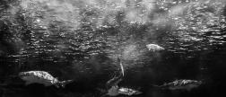fish-ncworks-28-of-48