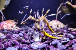 fish-ncworks-44-of-48